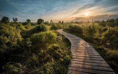 The Path Where 'Intention' Leads You